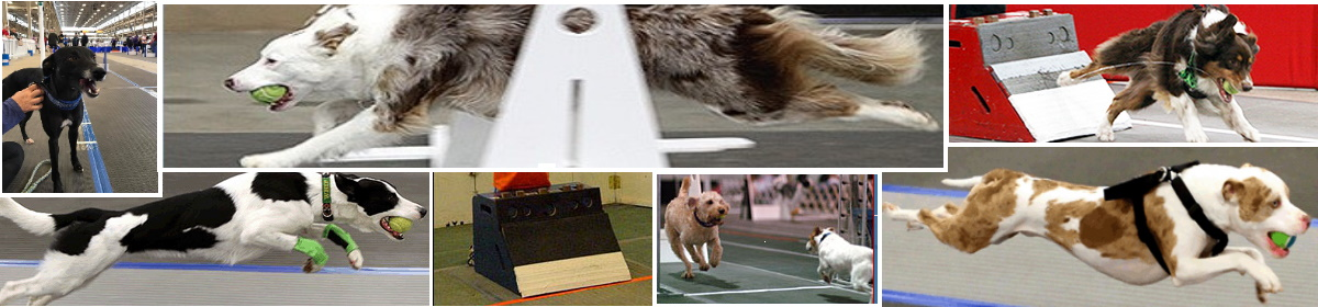 North American Flyball Association Blog